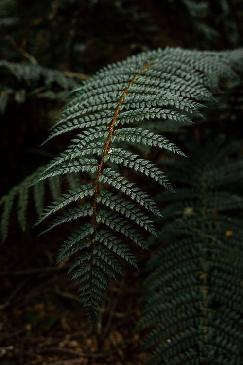 Green leaf of fern branch in forest