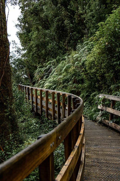 Wooden winding footbridge located through green trees and shrubs in forest at daytime