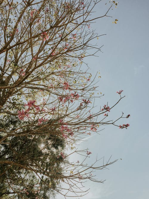 Pink and White Flowers Under White Sky