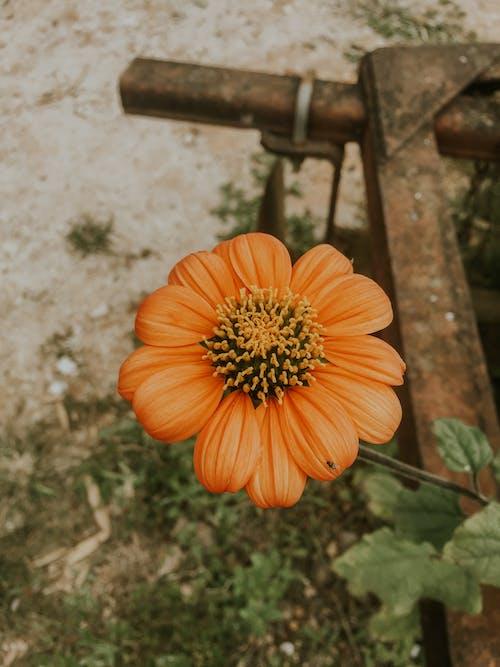 Orange Flower on Gray Concrete Floor
