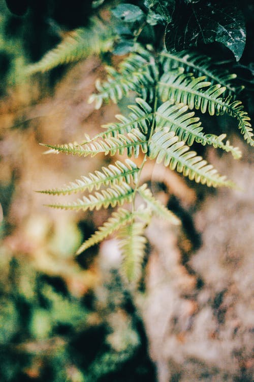 Overturned green fern with lush vibrant foliage in forest in sunlight on blurred background