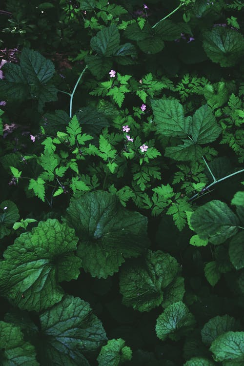 From above of young dark green leaves of India pennywort and Geranium robertanium in daylight in park
