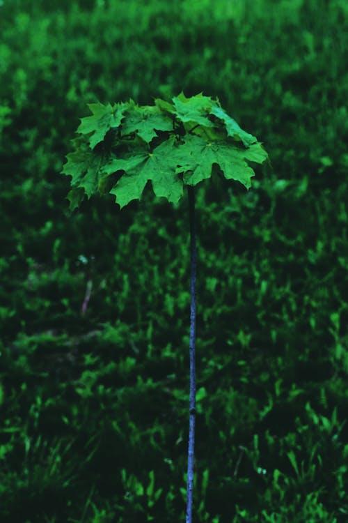 Photos gratuites de agriculture, arbre, botanique