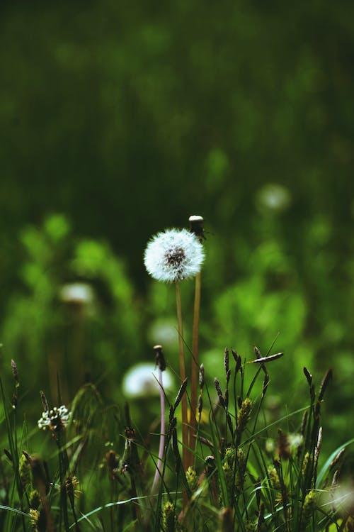 Kostnadsfri bild av äng, blomma, blommig