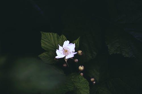 Foto d'estoc gratuïta de arbust, aroma, bellesa