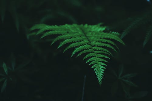 Fern in forest immersed in greenery