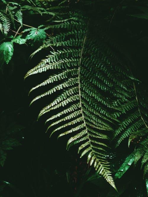 Imagine de stoc gratuită din a sublinia, anotimp, arbust, armonie