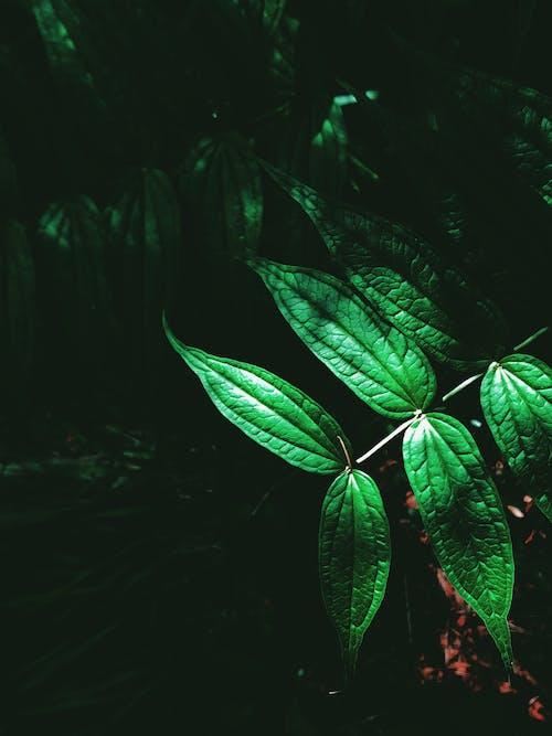Бесплатное стоковое фото с ботаника, весна, веточка