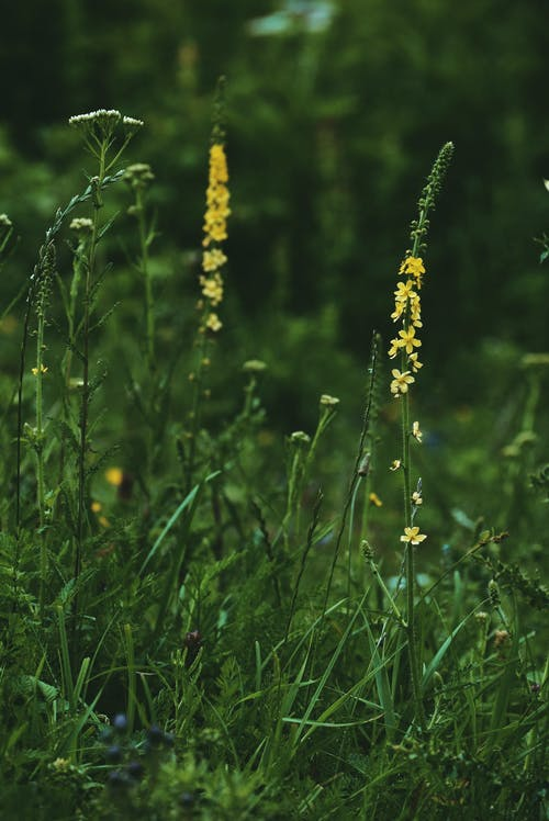 Tiny yellow flowers on thick dark green stem surrounded by flowers and grass in meadow