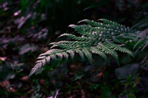 Vibrant fern in rainforest in sunlight