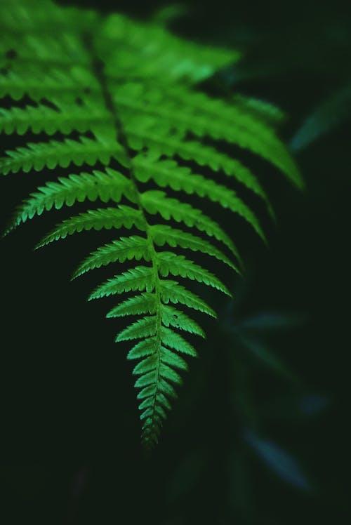 Closeup of big bright green leaf of tropical fern plant growing in rainforest