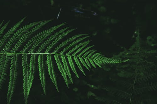 Leaves of green fern at dark