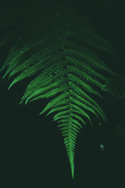 Immagine gratuita di agricoltura, ambiente, botanica, botanico