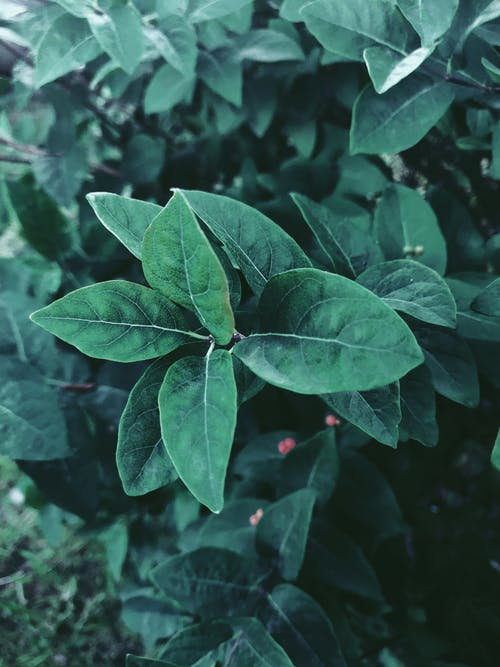 Green plant with pointed leaves in forest