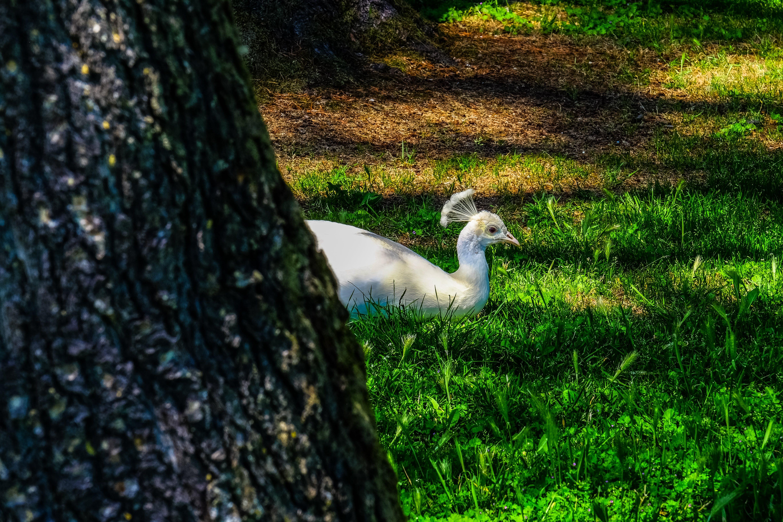 Foto d'estoc gratuïta de ales, animal, arbre, bagul