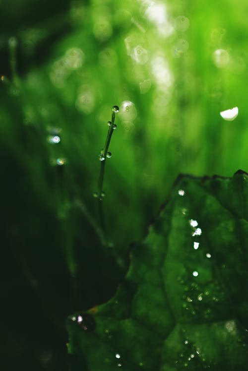 Closeup bright green plant leaf with water drops in tropical forest after rain