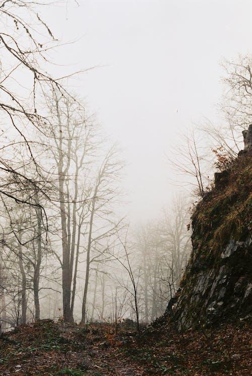 Dead Trees on a Foggy Day