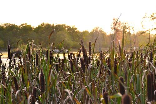 スウェーデン, 日没, 水, 池の無料の写真素材