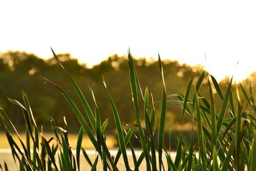 スウェーデン, 日没, 緑, 自然の無料の写真素材