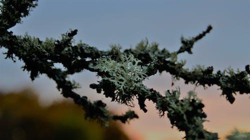 日没, 枝, 自然の無料の写真素材