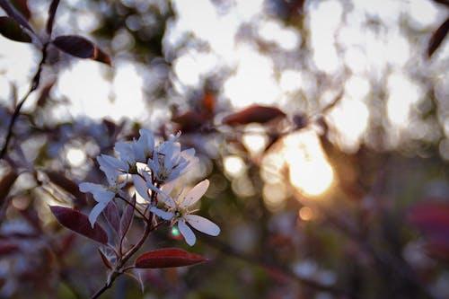 夏, 日没, 枝, 白の無料の写真素材
