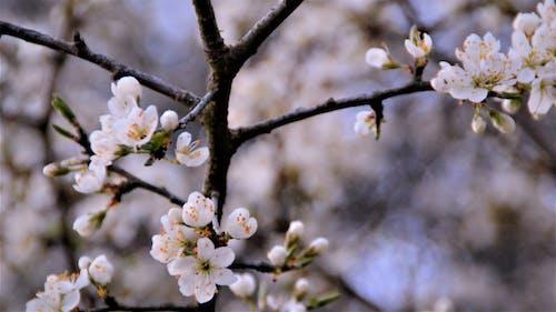枝, 自然, 花の無料の写真素材