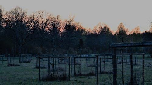木, 深夜, 風景の無料の写真素材