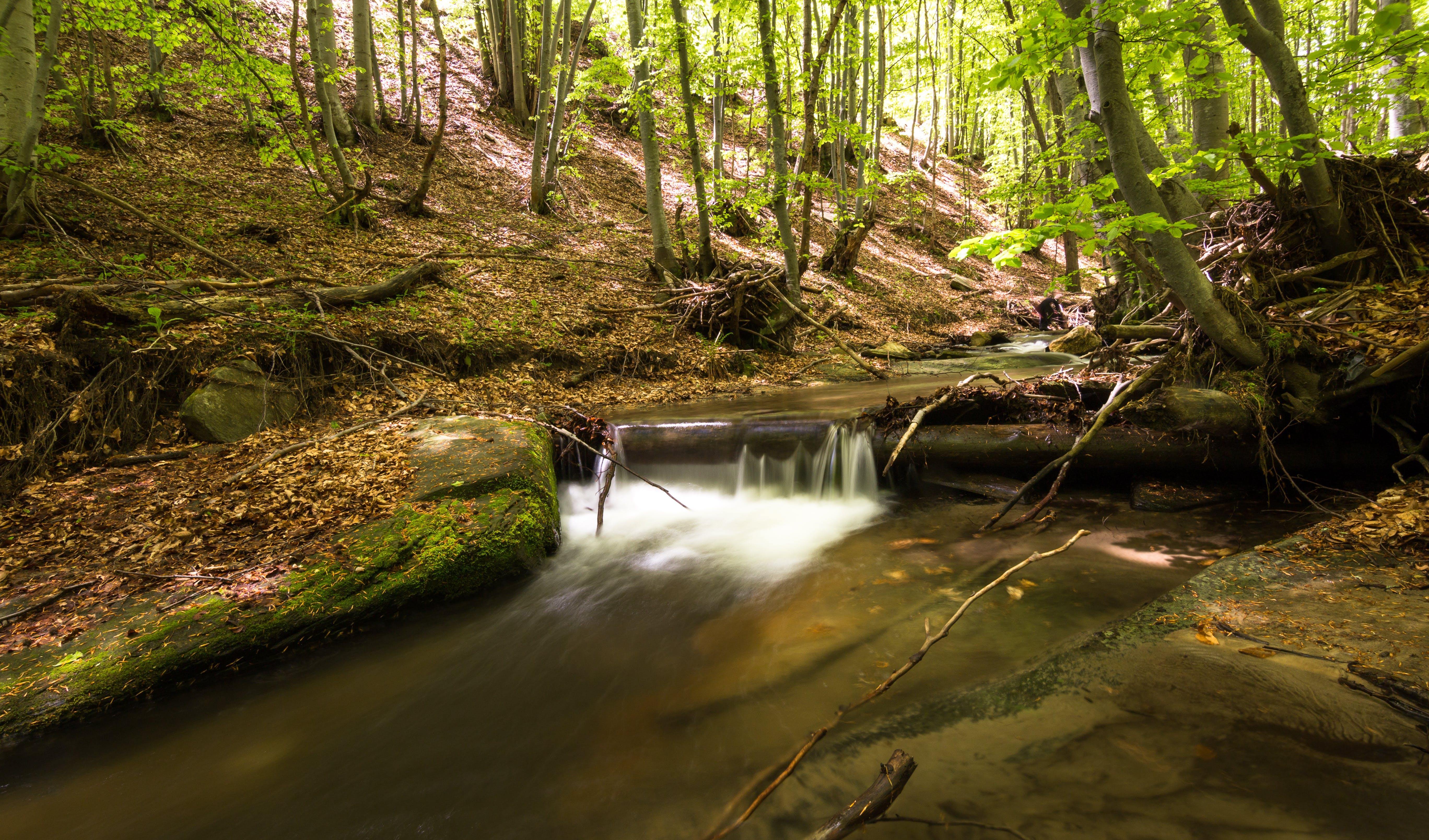 คลังภาพถ่ายฟรี ของ กระแสน้ำ, การเคลื่อนไหว, การเปิดรับแสงนาน, ตะไคร่น้ำ