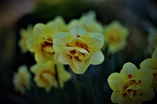 Kostenloses Stock Foto zu garten, gelbe tulpen, sommer