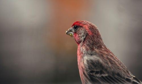 Fotos de stock gratuitas de afilado, animal, armonía, atento