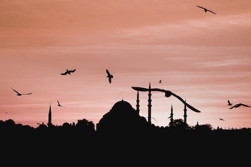 Безкоштовне стокове фото на тему «вечір, вода, голуб, гусак»