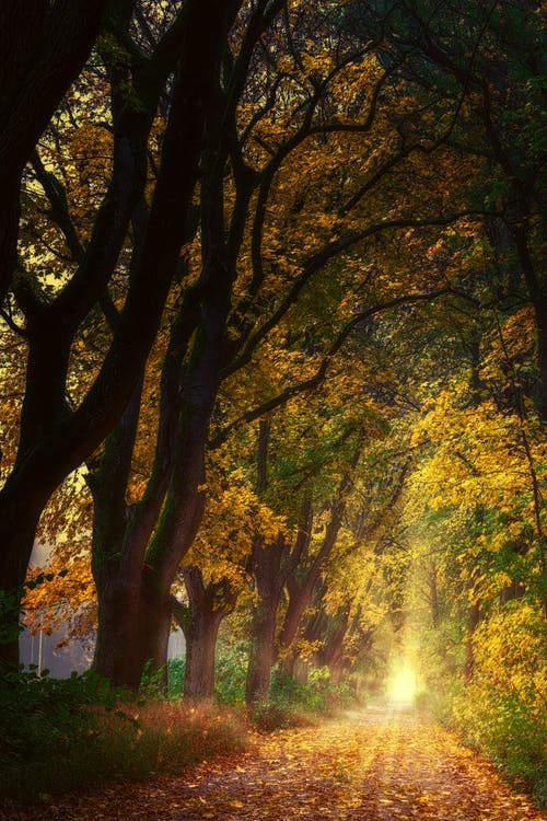 Spectacular view of bright shining sun illuminating golden path with faded leaves between growing trees in fall at dawn