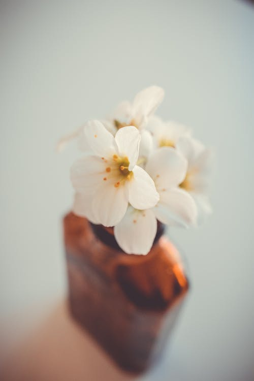 Blossoming flowers in vase at home
