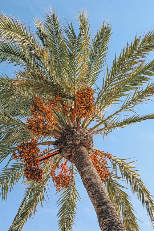 Δωρεάν στοκ φωτογραφιών με από κάτω, δέντρο, διακοπές, εξωτικός