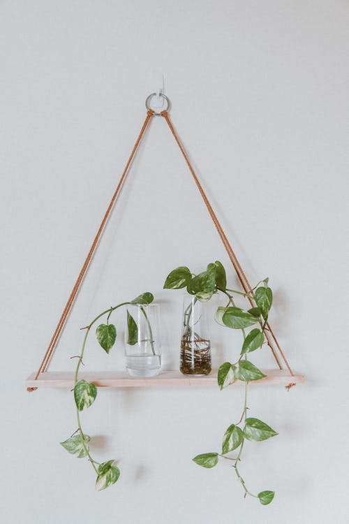 Green Plant on White Wooden Wall Mounted Rack