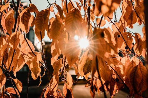 Free stock photo of abstract, autumn, autumn color