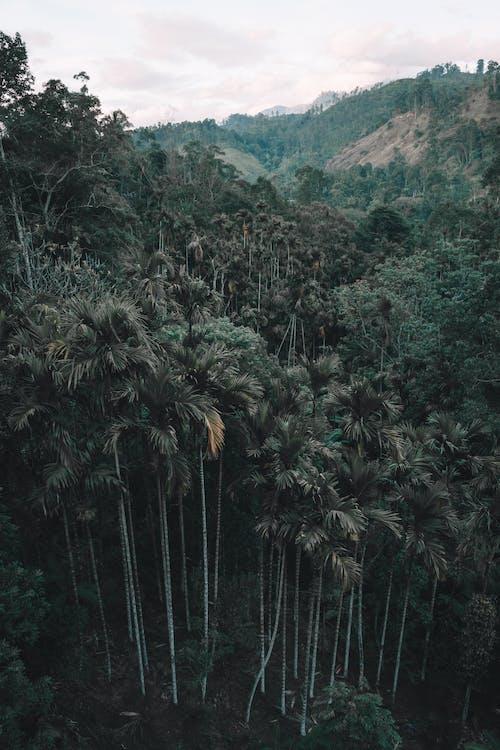 Fotobanka sbezplatnými fotkami na tému cestovať, dažďový prales, denné svetlo, dlaň