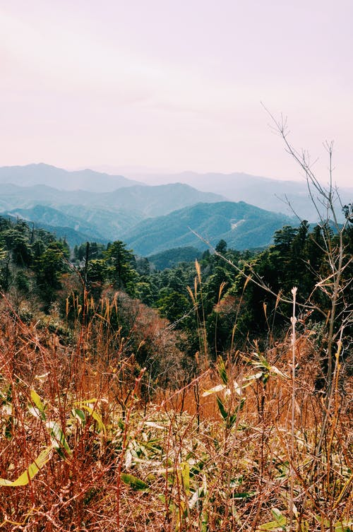 Dry grass and green forests on mountains