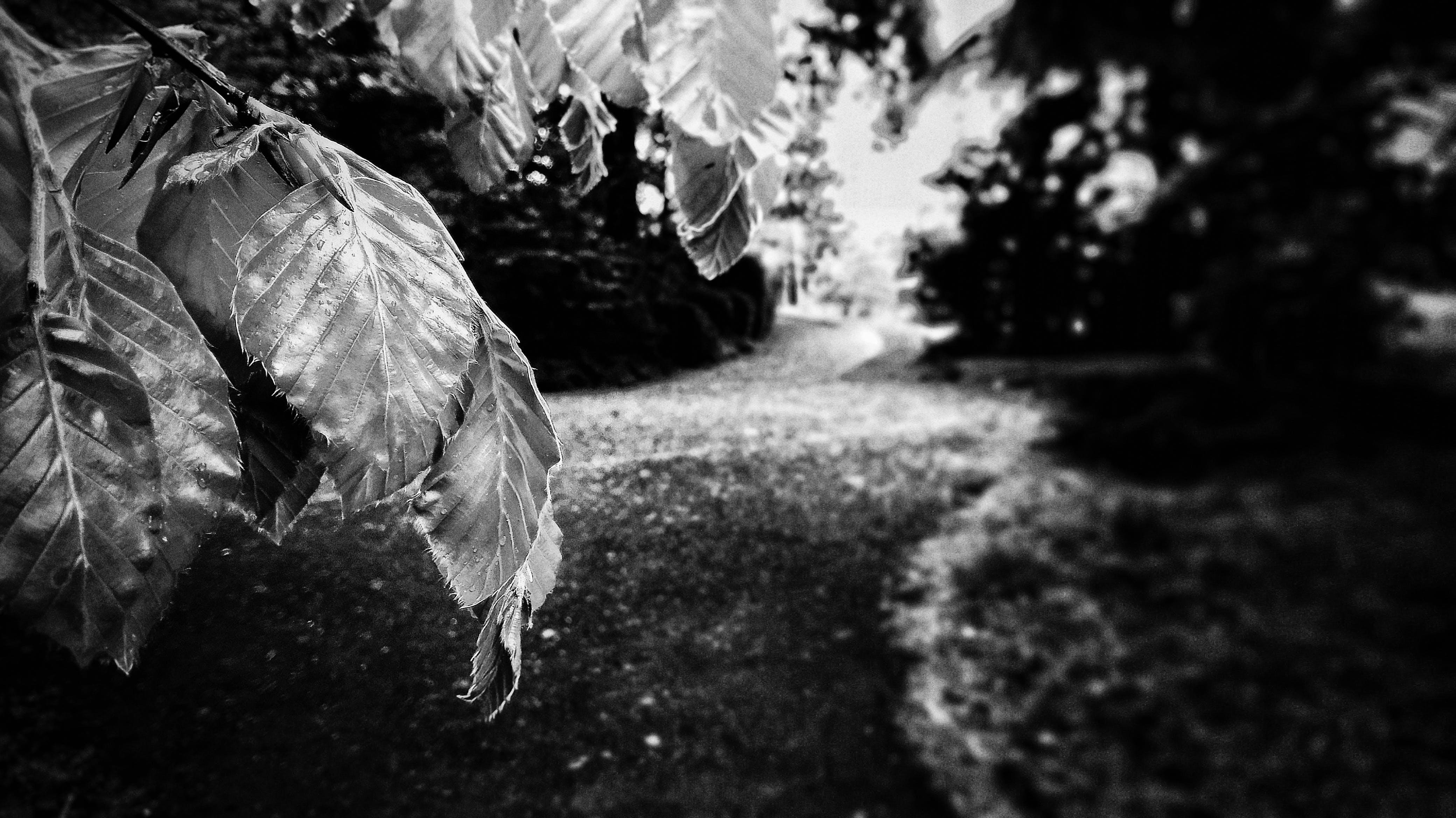 Free stock photo of black&white, road