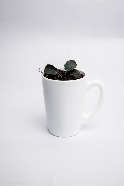 Green Plant in White Ceramic Mug