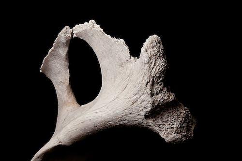 Aged white bone on black background