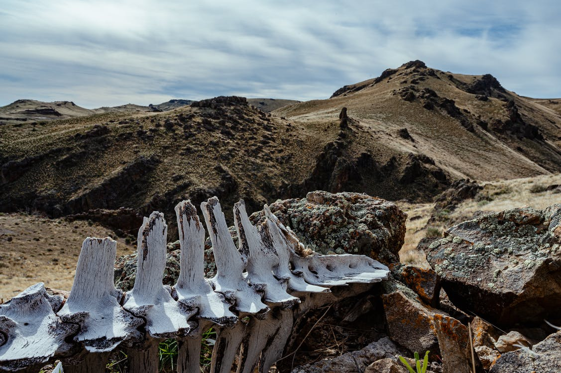 Ancient animal spine skeleton in rocky terrain