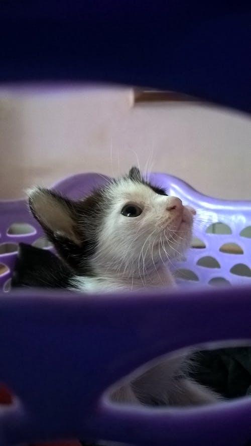 Free stock photo of glare, hello kitty, kitten
