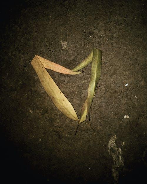 Free stock photo of animal lover, autumn leaf, dark night, iphone