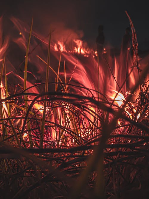 Grass on Fire at Night Time