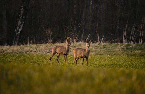 Fotos de stock gratuitas de al aire libre, animal, animal salvaje, campo