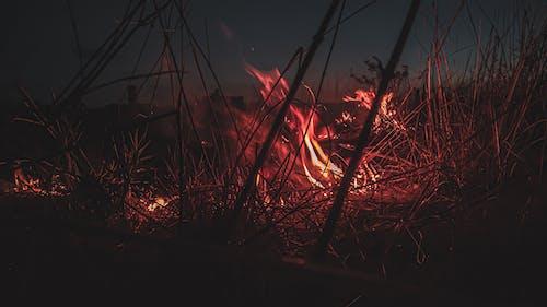Kostenloses Stock Foto zu abend, brennen, dunkel, farbe