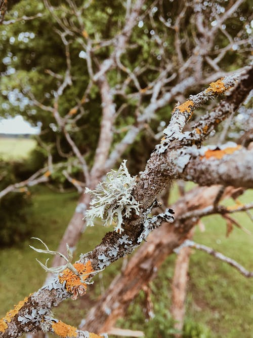 Tree Branch with Fungus