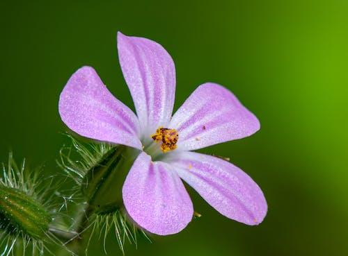 Tender pink flower of green plant