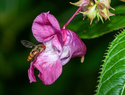 Hoverfly on blooming exotic flower